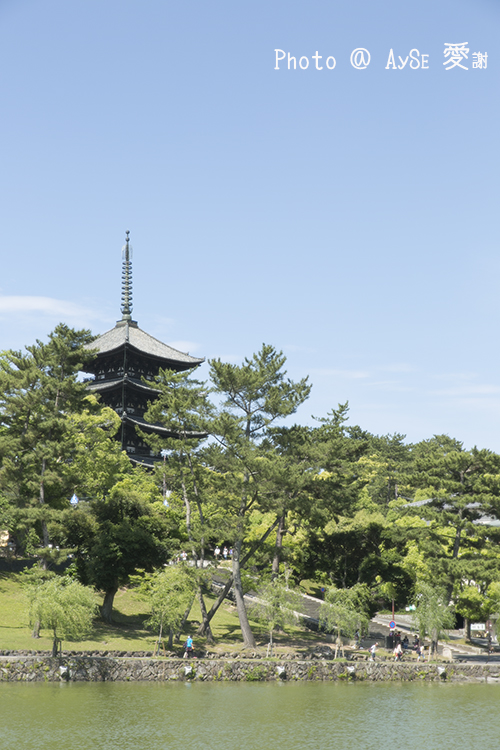 奈良 広沢池