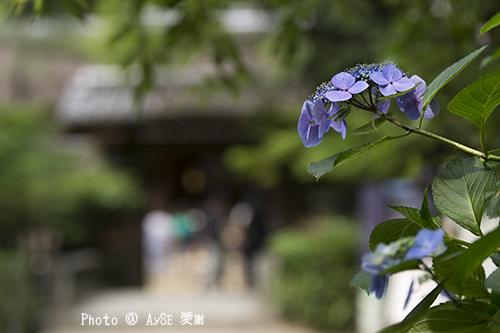 京都 宇治上神社 世界遺産