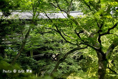 東福寺 通天橋・開山堂