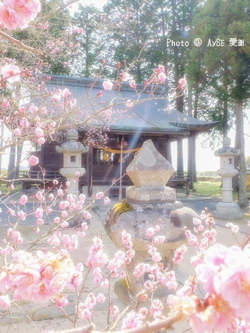 篠山城跡 青山神社