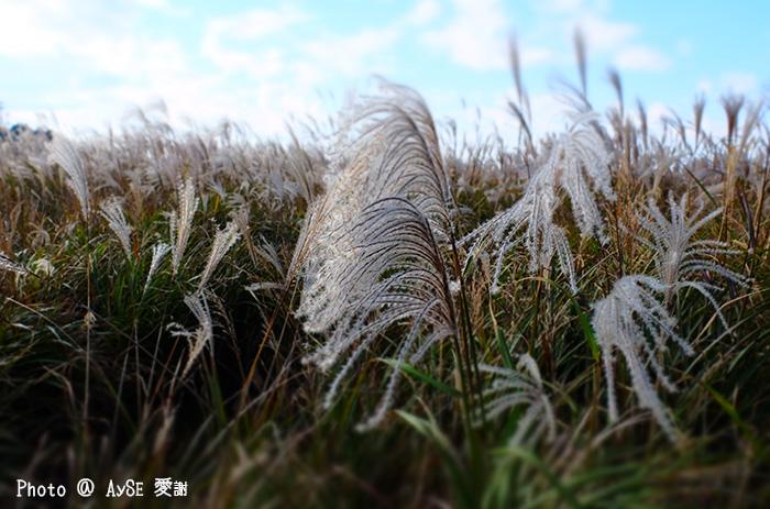 ススキの海原 生石高原
