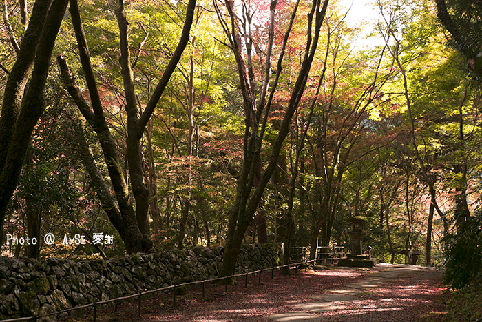 世界遺産 栂尾山 高山寺